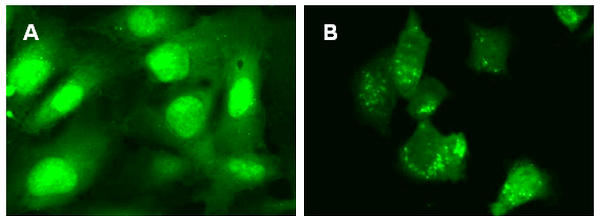 induceing autophagy and inhibiting lysosomal degradation of autophagosomes.