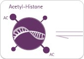 HDAC assay kit to detect alterations in chromosome structure due to histone acetylation/deacetylation.