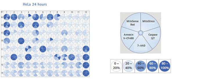 Heat-map based analysis can be used to analyze up to 8 parameters, from a plate-based study, in real time.