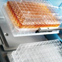 multiscreen plate products for cell culture