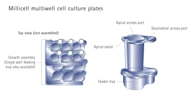 Merck:/Freestyle/BI-Bioscience/Cell-Culture/new-cell-culture-images/MillicellMultiwell_InsertPlates.jpg
