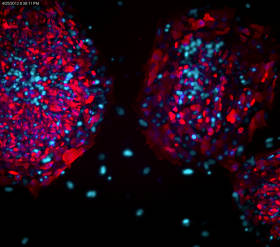 Human Pluripotent Stem Cell Characterization | Life Science Research | Merck