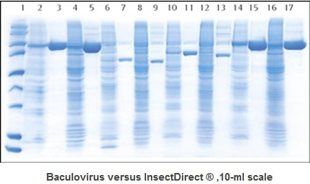 Comparison of traditional baculovirus method and InsectDirect® System method