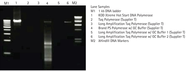 KOD Xtreme™ Hot Start Polymerase amplifies GC-rich targets more efficiently than other polymerases.