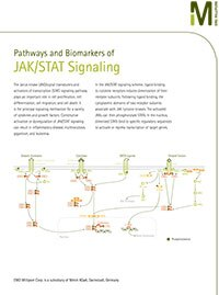 Merck:/Freestyle/BI-Bioscience/Inhibitors & Biochemicals/JAK_STAT_Pathway_FY_EM-1.jpg