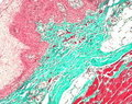 Merck:/Freestyle/LE-Lab-Essentials/Microscopy/LE-Staining Instruments-120x95-07082013.jpg