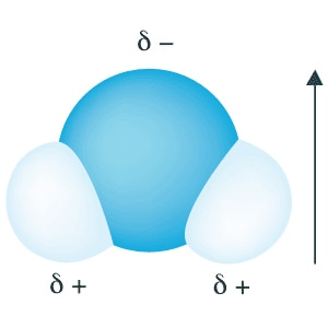 Water molecule with dipole